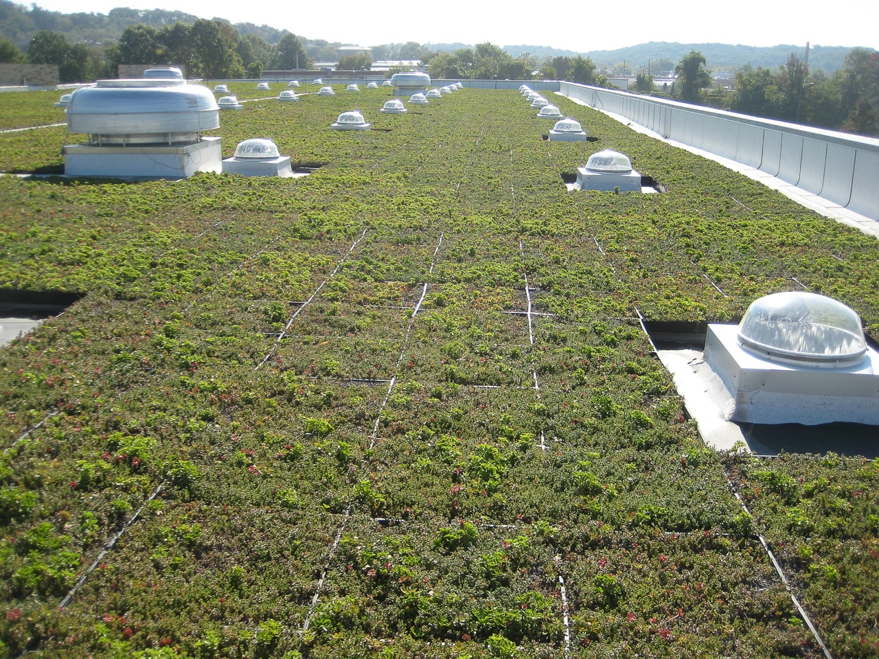 Green Roof  25