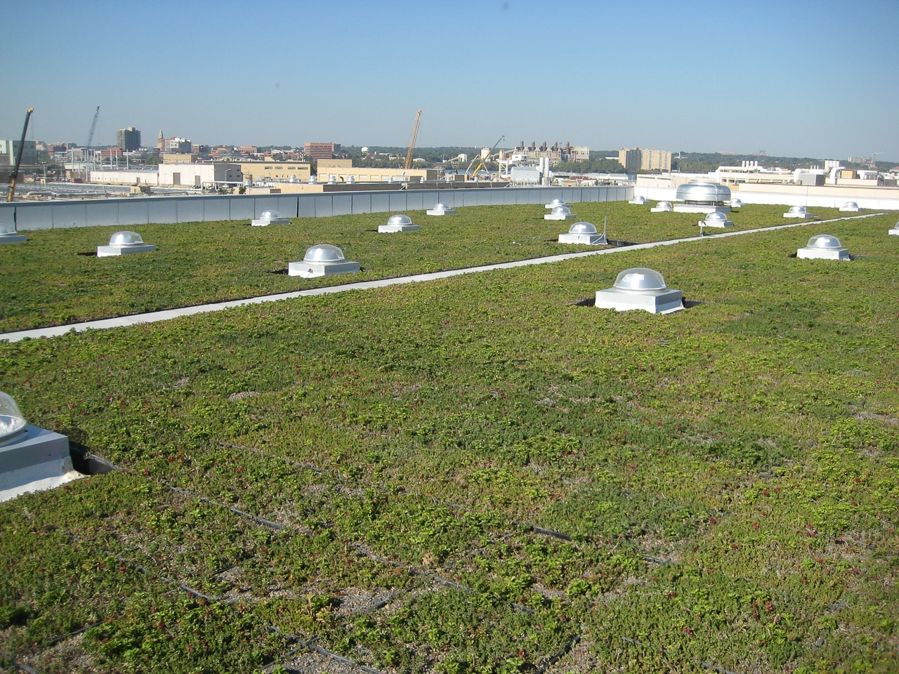 Green Roof  26